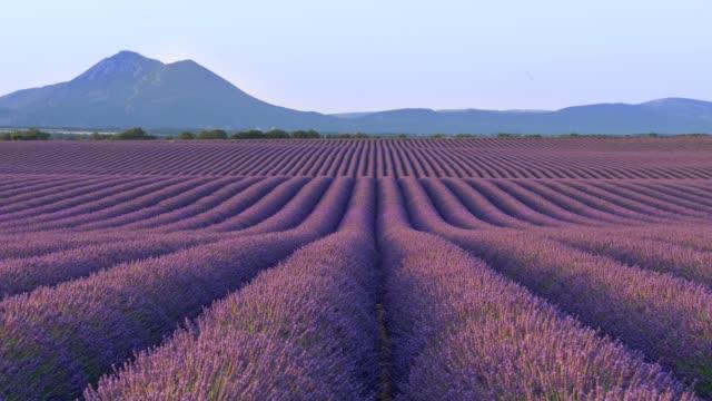 vídeos de stock e filmes b-roll de scenic view of endless fields of lavender in provence, france. purple flowers emit wonderful odour. blue mountains in background. panning shot, 4k - lavanda planta