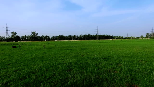Scenic view of green grass outdoor video
