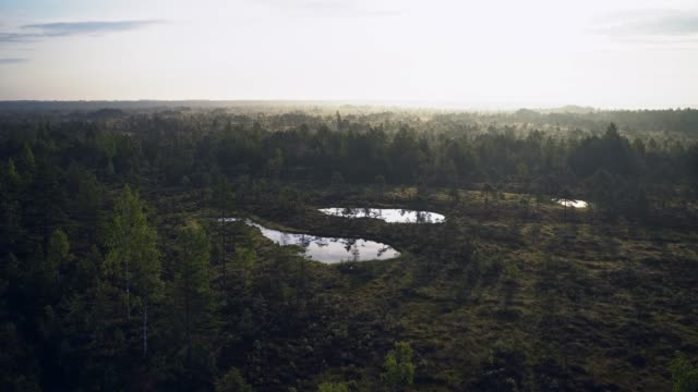 stockvideo's en b-roll-footage met schilderachtige mening van moeras in estland - estland