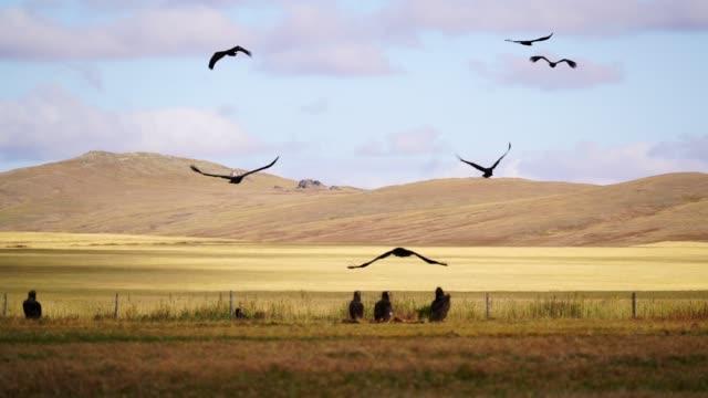 vista panoramica dell'avvoltoio nella steppa del deserto del gobi al tramonto - uccello rapace video stock e b–roll