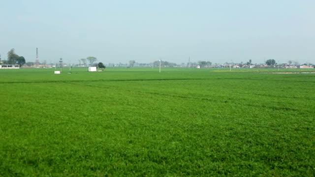 scenic view of wheat field - харьяна стоковые видео и кадры b-roll