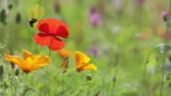 istock Scenic view of wildflowers in meadow 1258000156