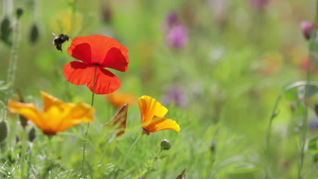 vídeos de stock e filmes b-roll de scenic view of wildflowers in meadow - prado
