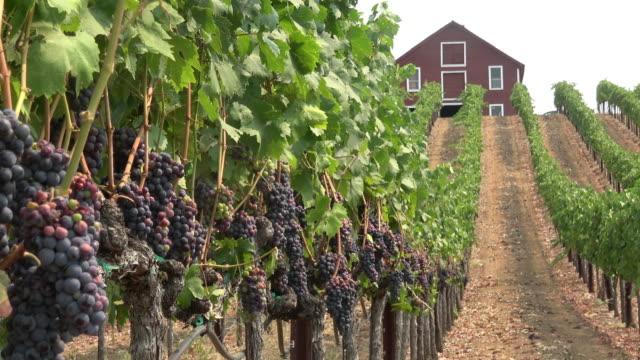 Scenic Vineyard Landscape
