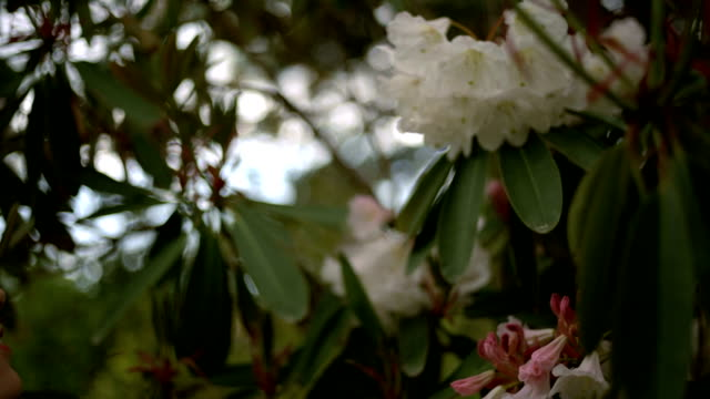 Scented Flowers video