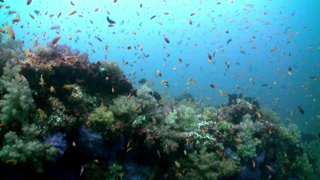 okul deniz çorbası renkli balık sürüsü resif üzerinde. - etçiller stok videoları ve detay görüntü çekimi