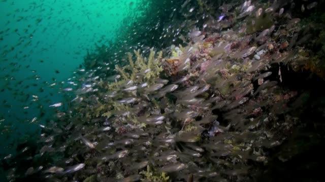 cam balık sürüsü resif üzerinde gece karanlığında okul. - etçiller stok videoları ve detay görüntü çekimi