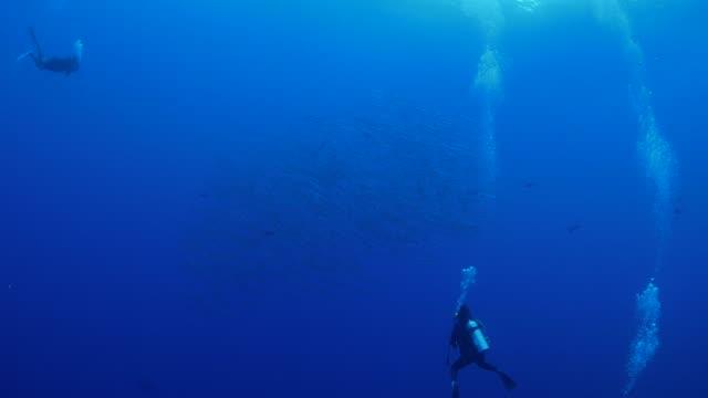 vídeos y material grabado en eventos de stock de escuela de pesca de la barracuda blackfin submarinos - palaos
