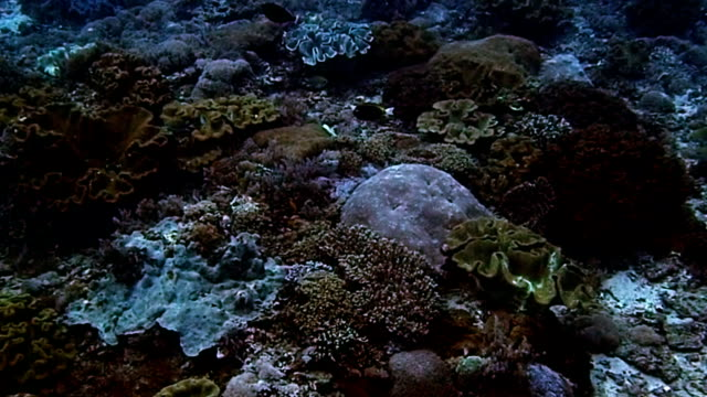 school of fish and colorful coral school of fish and colorful coral hard coral stock videos & royalty-free footage