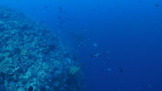 vídeos y material grabado en eventos de stock de banco de peces, arrecifes de coral, palau - sea life park