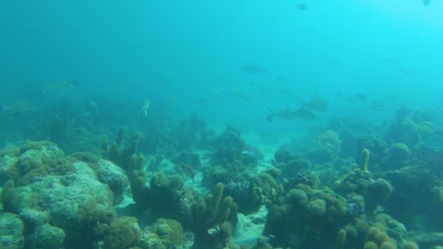 stockvideo's en b-roll-footage met school of fish deep underwater in turken en caicos - providenciales