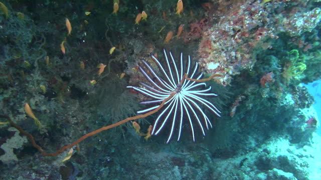 fiskstim på bakgrund färgglada koraller under vattnet i havet av maldiverna. - indiska oceanen bildbanksvideor och videomaterial från bakom kulisserna