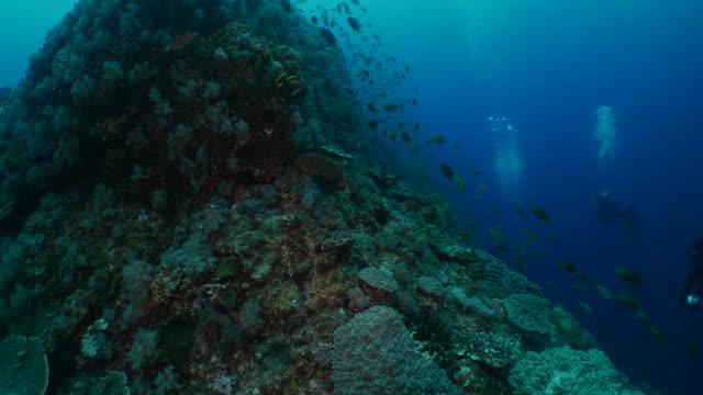 School of fish swimming at undersea coral reef in Japan Ogasawara Island, Tokyo, Japan - June 17, 2018 : Underwater sea life at Ogasawara (2018_0614_0621-06-17_152820-A) aqualung diving equipment stock videos & royalty-free footage