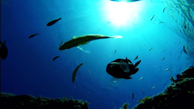 School of fish swimming under sea video