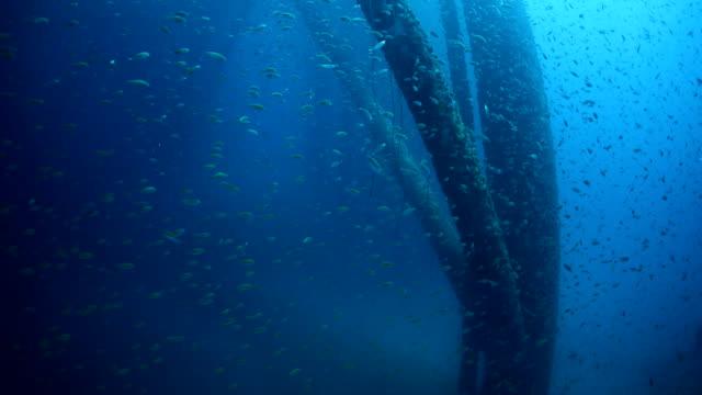 School of fish underwater near oil rig video