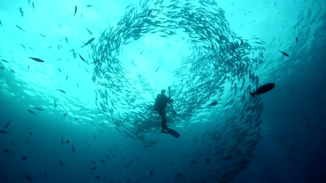 косяк рыб - дайвинг стоковые видео и кадры b-roll