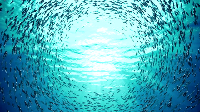 School of fish Large school of fish spinning underwater swimming stock videos & royalty-free footage