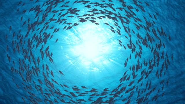 魚の群れ.シャークスは円の中で泳ぐ。 - 海点の映像素材/bロール