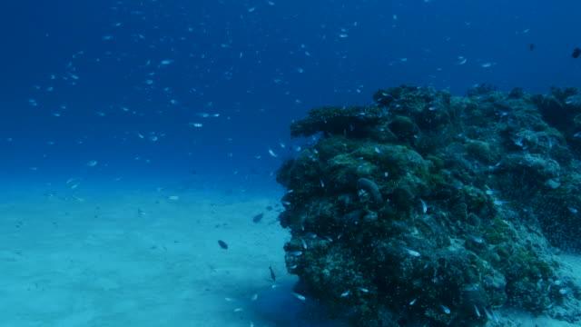 vídeos y material grabado en eventos de stock de escuela de peces de vidrio en un pináculo submarino con coral - sea life park