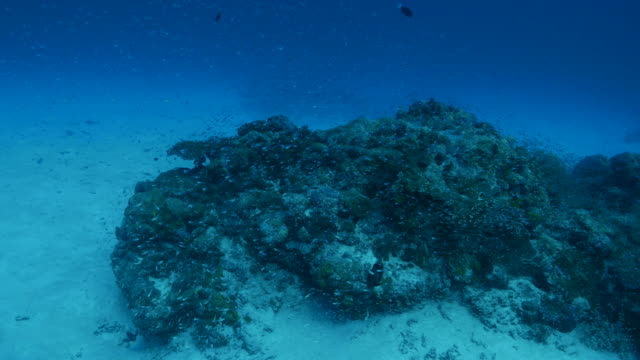vídeos y material grabado en eventos de stock de escuela de vidrio peces de arrecife de coral submarino - sea life park