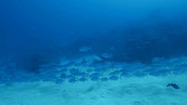 vídeos y material grabado en eventos de stock de escuela de peces gato nadando en una línea de submarinos - sea life park