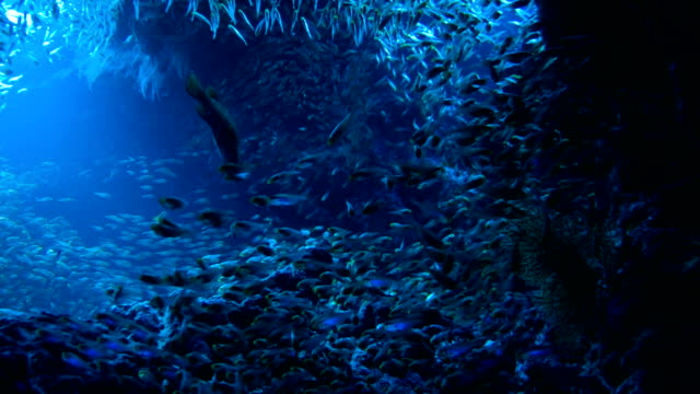 School of Red sea fish School of Red sea fish in deep cave blue water, Red sea, Egypt. Full HD underwater footage. aqualung diving equipment stock videos & royalty-free footage