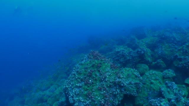 schule kleiner fische zum laichen im meer reef, darwin insel versammelt - laichen stock-videos und b-roll-filmmaterial