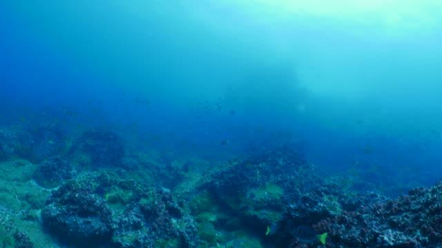 schule des kleinen fisches paarungs- und laichzeit undersea, galapagos - laichen stock-videos und b-roll-filmmaterial