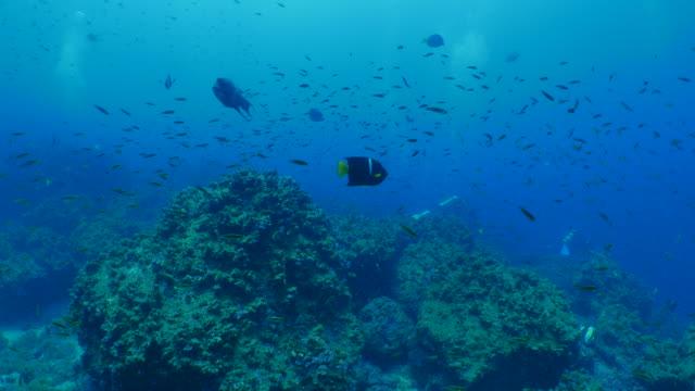 schule kleiner fische laichen im unterwasser riff - laichen stock-videos und b-roll-filmmaterial