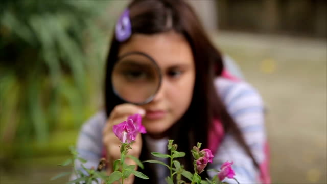 schoolgirl examining flower  with magnifying glass - curiosità video stock e b–roll