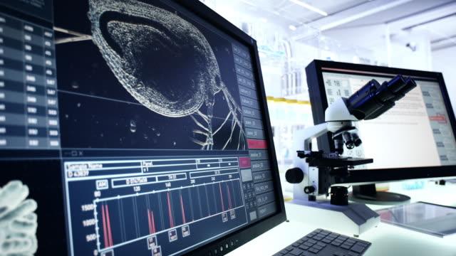 Science Laboratory Research. Water flea daphnia on Computer Screen Monitors in futuristic laboratory flea insect stock videos & royalty-free footage