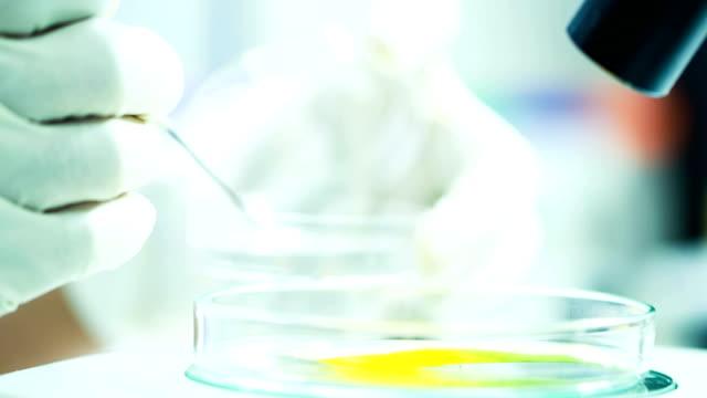 wissenschaftler labor experimentieren und bio - gold waschen stock-videos und b-roll-filmmaterial