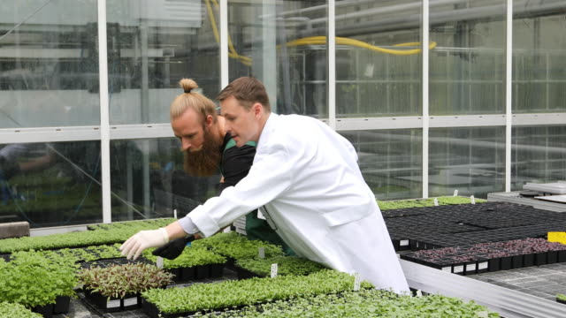 scientist and farmer discussing over saplings Lockdown shot of scientist and farmer discussing over saplings in greenhouse. Professional is holding digital tablet. Males are wearing uniforms. stem research stock videos & royalty-free footage