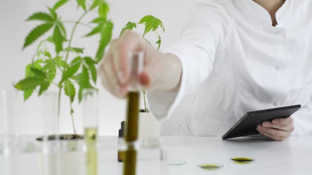 Scientist checking a pharmaceutical CBD oil in a laboratory with a tablet Female scientist in laboratory testing cbd oil extracted from a marijuana plant. She is using a various glass tubes and bowls for the experiment. Saving notes and results on a tablet. marijuana herbal cannabis stock videos & royalty-free footage