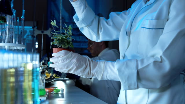 Scientist doing experiments on a plant video