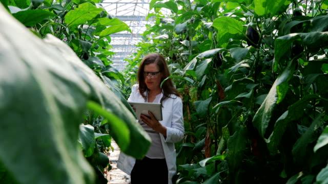 wissenschaftler untersuchen pflanzen und mit digital-tablette in das gewächshaus 4k - gewächshäuser stock-videos und b-roll-filmmaterial