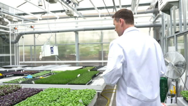 Scientist examining saplings in greenhouse video