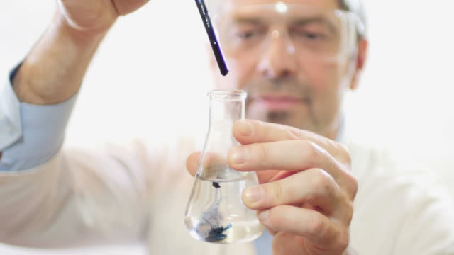 A scientist in a lab putting some chemicals into an Erlenmeyer flask due to test the hardness of the water - the water is soft and the content becomes blue video