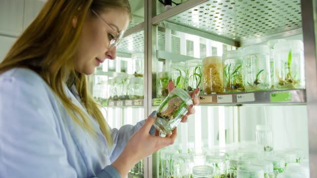 Scientist in biotechnology laboratory video