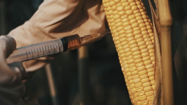 SLO MO Scientist modifying the corn video