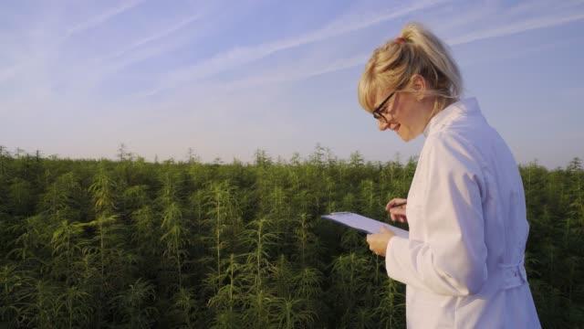 scientist observing cbd hemp plants on marijuana field and taking notes - pistillo video stock e b–roll