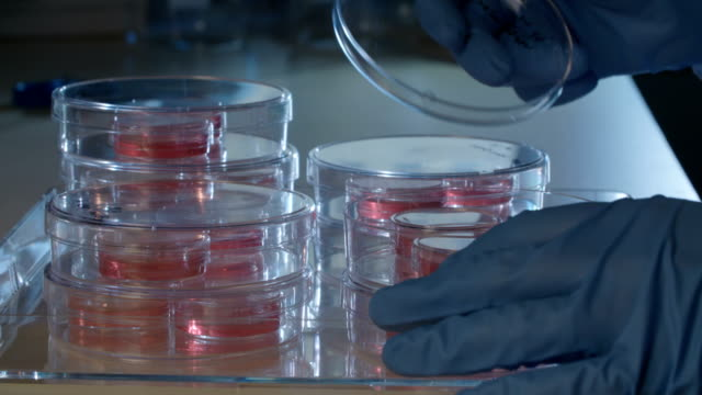 Scientist working with Petri dishes in a laboratory video