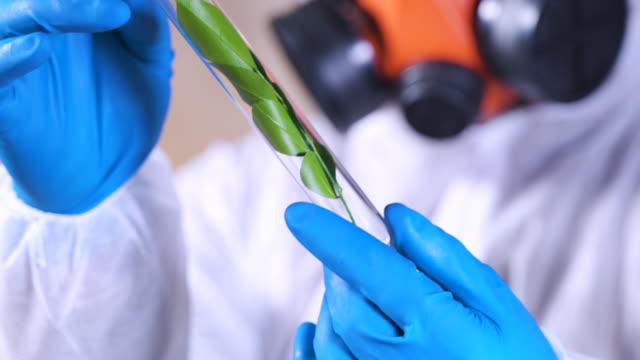 scientist works in a ecology medical biotechnology pharmacology laboratory. bio lab research. genetically modifying food. science farming. green science lab agriculture. plant scientist in laboratory. - science research stock videos & royalty-free footage