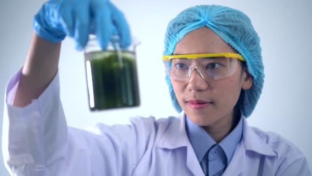 wissenschaftler forschen im labor an bioenergie, biokraftstoff aus algen - algen stock-videos und b-roll-filmmaterial