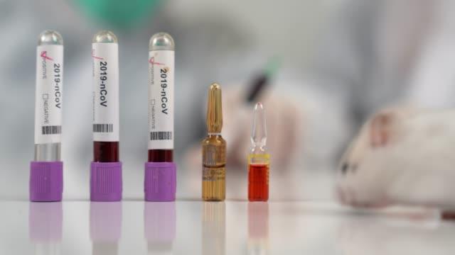 bilim adamları laboratuvar faresi, şırıngayla fareyi test ediyor. bilim adamı ve laboratuvar faresi arka zemin. coronavrius test tüpleri. coronavirus aşısı. - kemirgen stok videoları ve detay görüntü çekimi