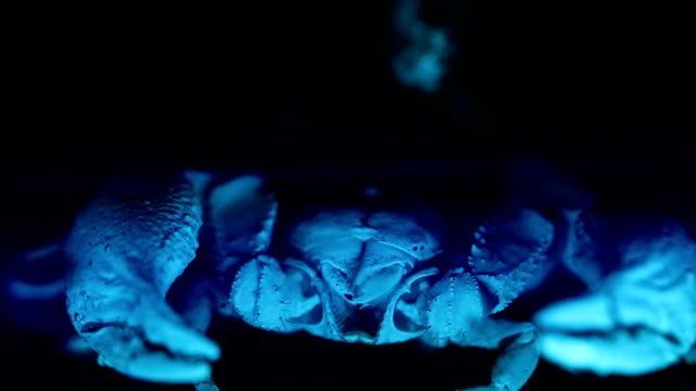 Scorpion under ultraviolet light