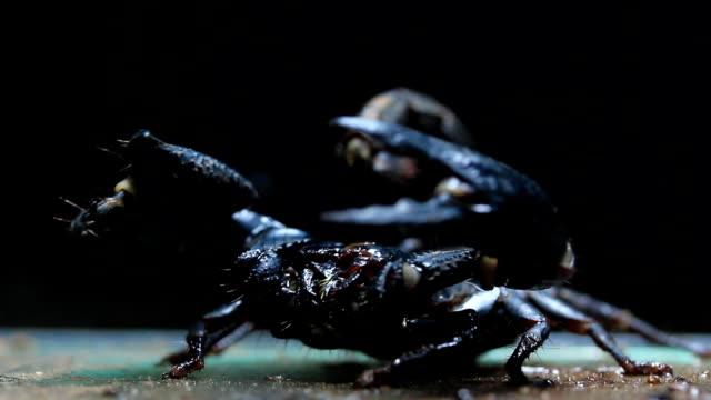 scorpion video