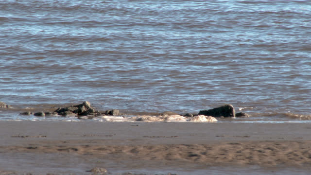 vídeos de stock e filmes b-roll de scottish beach on a bright sunny day - plano picado
