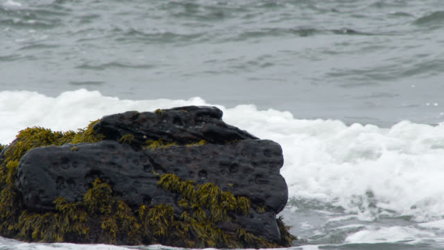Scottish coastline on a grey overcast Autumn day Scottish coastline in Dumfries and Galloway, south west Scotland on a grey overcast Autumn day dumfries and galloway stock videos & royalty-free footage