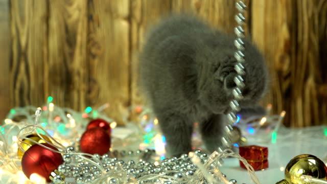 スコットランドの折りたたみ子猫は、クリスマスの装飾で遊びます - ネコ科点の映像素材/bロール